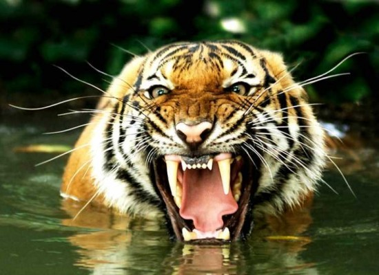 The Tiger Growls – Asia's Impressive Statistics