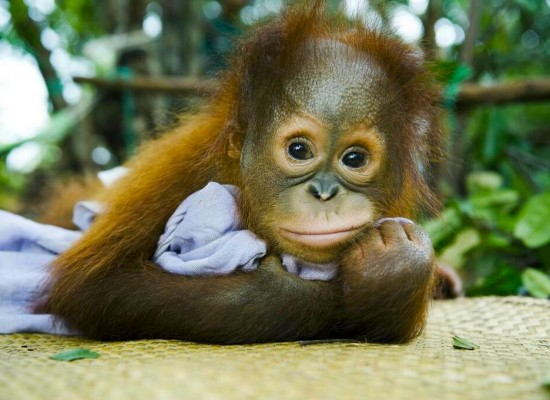 Nearly a Third of Borneo's Rainforest Is Gone