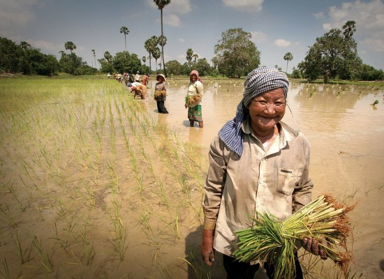 What it's like to be a rice farmer