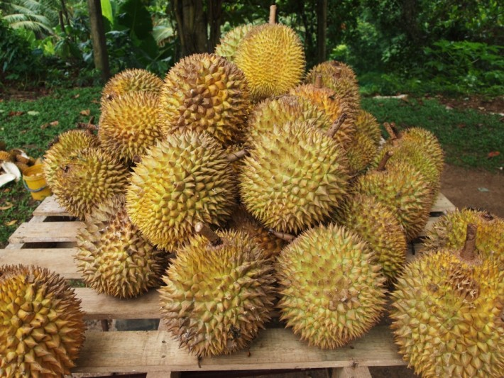 This insane fruit is probably the world's most celebrated (and persecuted)
