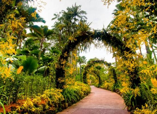 Singapore's Botanic Gardens eyes World Heritage status