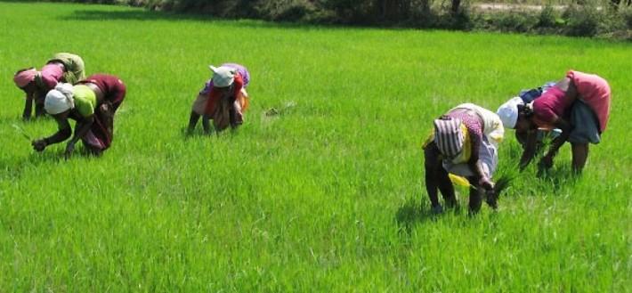 Nigeria Wants Thai Agribusinesses to Invest