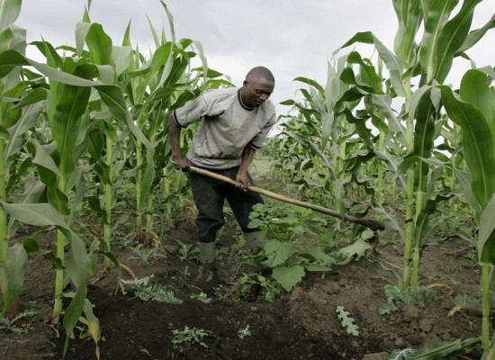 Nigeria Wants to Partner with China on Agricultural Development