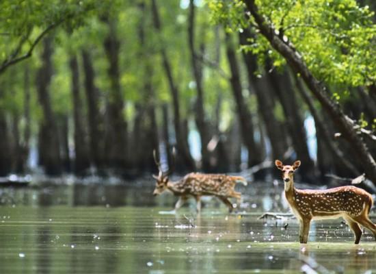 Bangladesh Focuses on Tourism