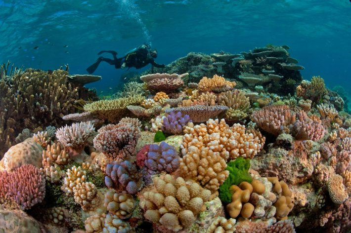 Over $6 Billion Needed To Fix Great Barrier Reef Water Quality