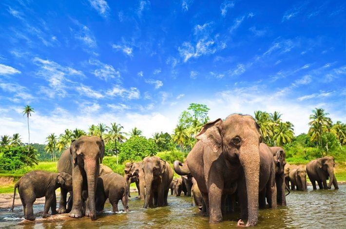 Sri Lanka's Gift of Nature