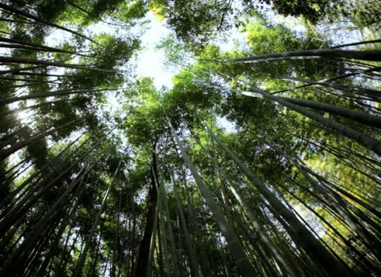 Asia needs 300 billion dollars a year to uphold Paris climate goals