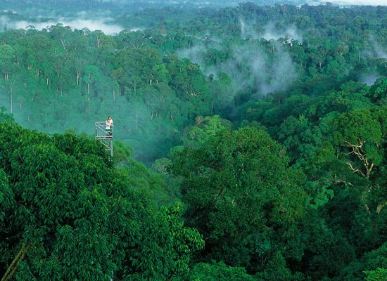 Forest Cover is Critical for Asia