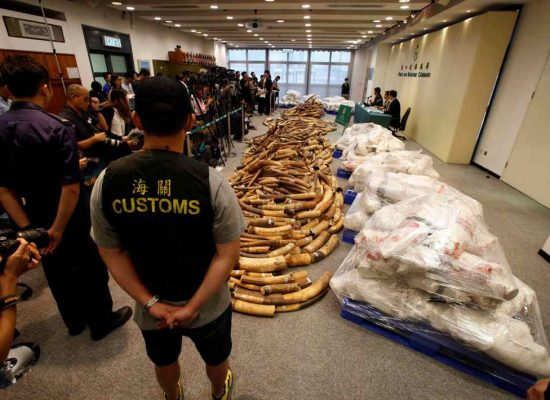 Hong Kong makes record-breaking multimillion-dollar ivory seizure
