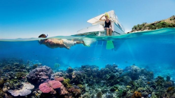 A Bold Idea to Stop Coral Bleaching